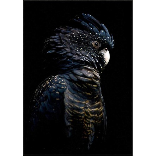 Black Cocky Framed Canvas
